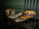 Март 2010. Групповой портрет. 20. Автор: Елена Барзова, Нагария, Израиль