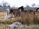 Март 2010. Групповой портрет. 26. Автор: Альфред Микус, Минск, Беларусь