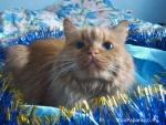 106. Кошка Варя. Автор: Мария Маруга, Москва