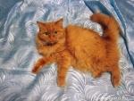 105. Кошка Варя. Автор: Мария Маруга, Москва