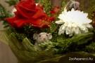 83. Ушастый цветок. Автор: Константин Иващенко, г. Москва