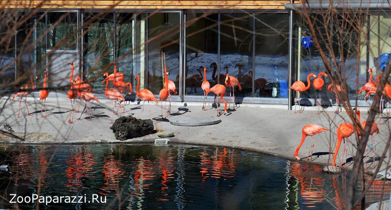 36. Фламинго. Автор: Людмила Семенова. Санкт-Петербург
