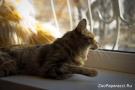 17. Скучный пейзаж за окном. Автор: Ирина Андреева. Хабаровск