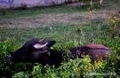 40. Любимица малышей. Автор: Анна Андреева. с. Хлевное, Липецкая область