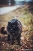 43. Кот чистил шубку. Автор: Елизавета Травка. с. Хлевное, Липецкая область