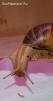 83. Заветная цель. Автор: Наталья Барыбина. Домодедово, Московская обл.