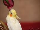106. Сказка о попугае и розе. Автор: Лала Загурская. Москва