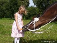 18. На морковку! (Ксюша и ее лошадь Ласка). Автор: Светлана Ищенко. Минск, Беларусь