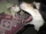 Сентябрь 2009. Животные общаются