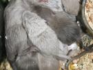 7. Без названия. Автор: Ангелина Бондарь, Севастополь, Украина
