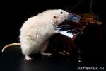 66. Маленький Моцарт часами упражнялся в игре на рояле... Автор: Евгения Киселева, Томск