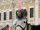 34. Королева. Автор: Антон Шикин, Ярославль
