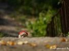 49. Красная шапочка в засаде. Автор: Александра Морозова, Челябинск