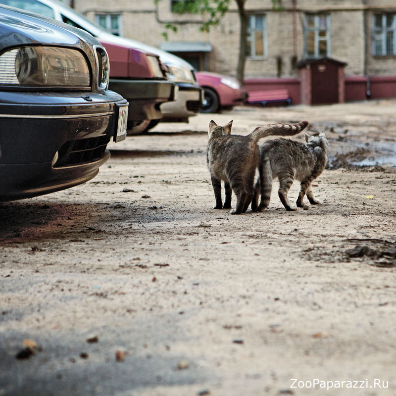 34. Без названия. Автор: Анна Абразумова. Минск, Беларусь