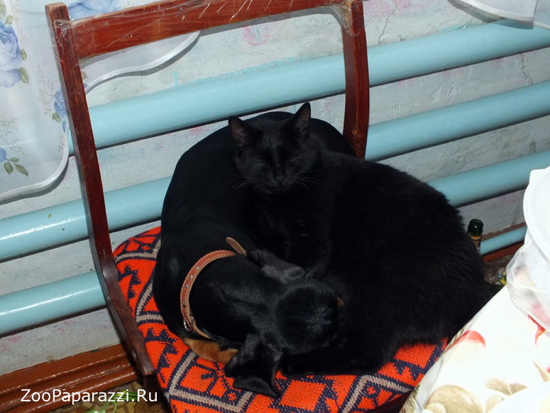 46. Автор: Кристина Кудрявцева. Усть-Лабинск, Краснодарский край.