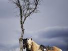 14. Лошади. Автор: Дмитрий Войнов. Майкоп