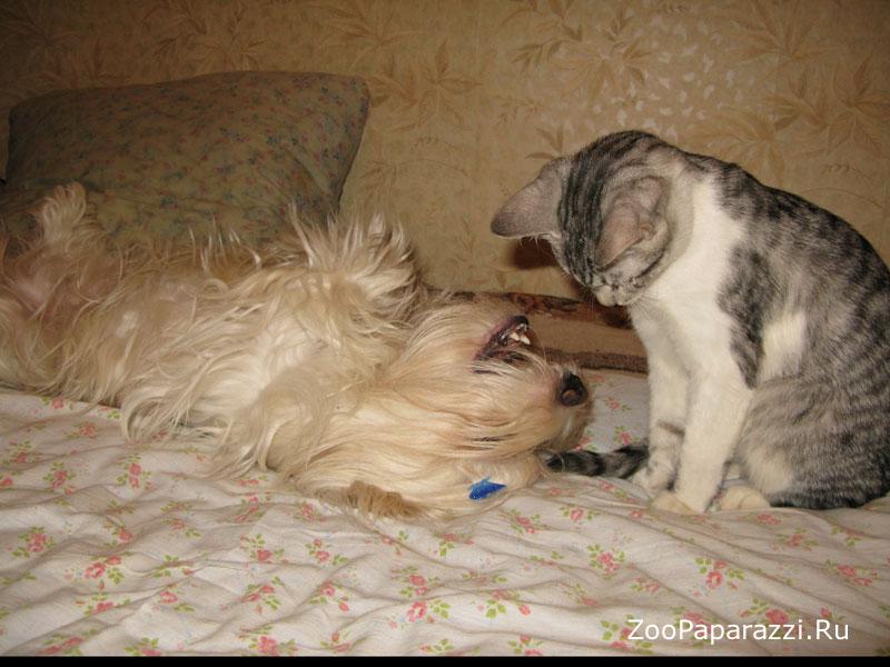32. Я стоматолог-кот, откройте шире рот! Автор: Виктор Зорин. Москва