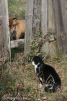 4. Кот и лиса. Автор: Александр Зозуля. Мозырь, Гомельскаая обл., Республика  Беларусь