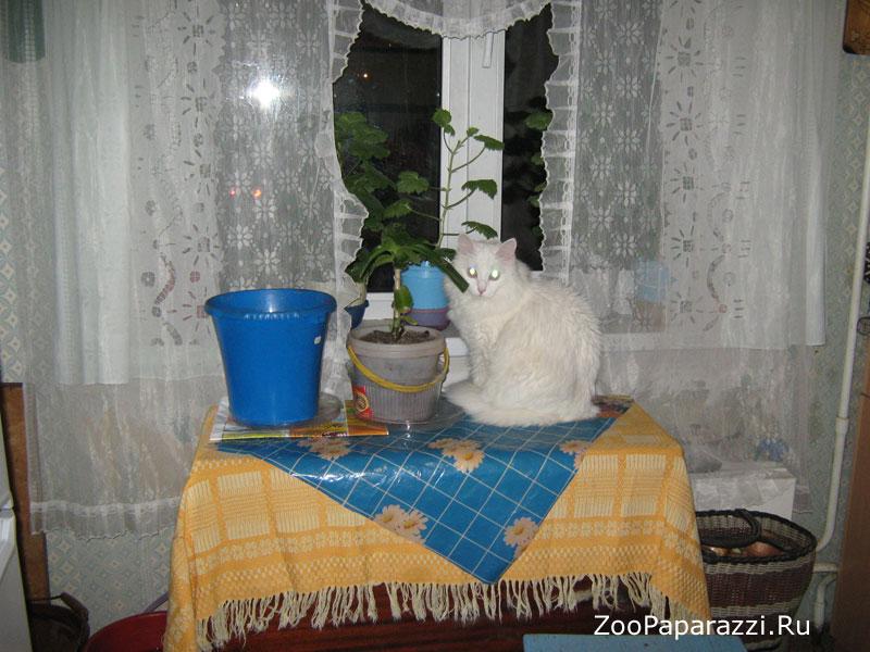 107. Без названия. Автор: Иван Грозных. Екатеринбург