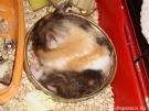 5. Блюдо дня - мама в миске. Автор: Мария Крюкова, Москва