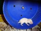 71. Большая пробежка маленького хомячка. Автор: Мария Крюкова. Москва