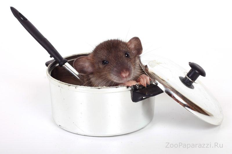 134. Не любите крыс? Вы просто не умеете их готовить! Автор: Евгения Киселева. Томск