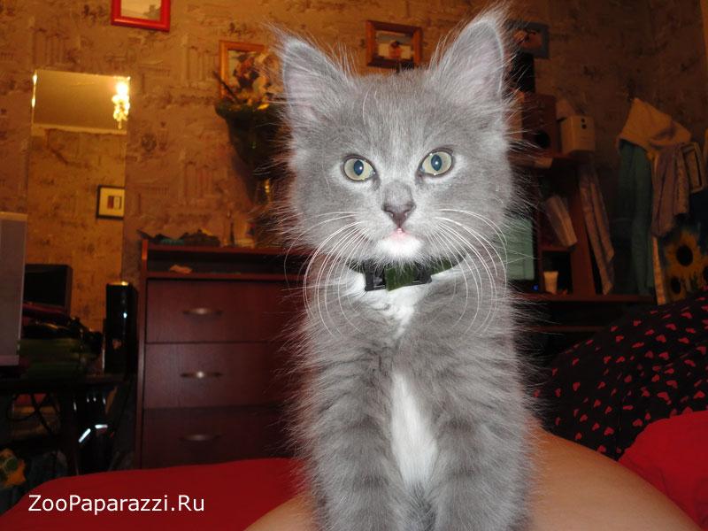 145. Без названия. Автор: Виктория Попова. Санкт-Петербург