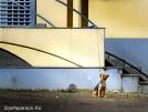 4. Пока хозяйка в SPA-салоне... Автор: Альфред Микус. Минск, Республика Беларусь