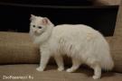 37. Кошка Мася. Автор: Юлия Челышева. Тверь