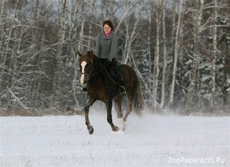 38. Зимняя прогулка. Автор: Ирина Захарова. Москва