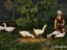 7. Пастушка. Автор: Дмитрий Войнов. Майкоп