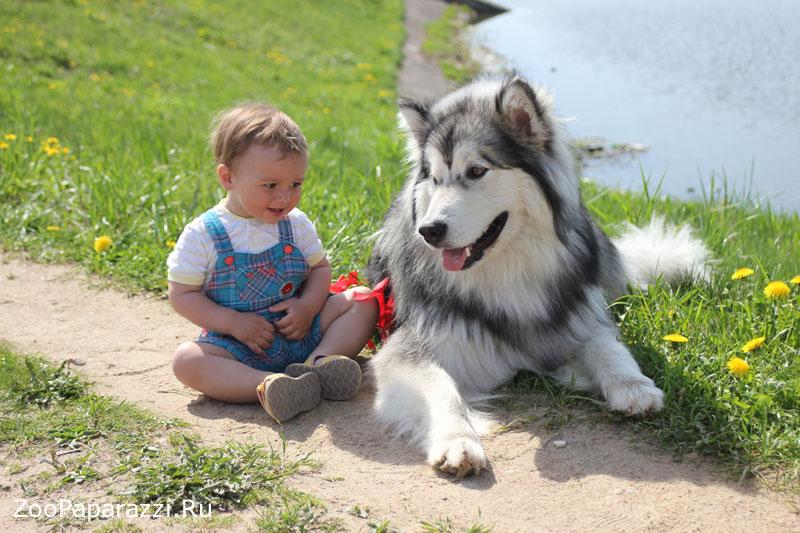 Первое место в номинации «Животное и человек» за фотографию «Малыш Филипп и маламут Джеки».