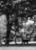 4. Кот выгуливает хозяина. Автор: Елена Лысенко. Москва
