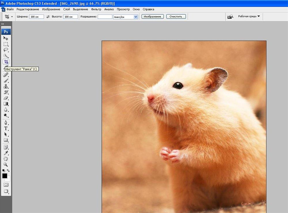 Скачать программу для обрезки нужного размера фотографий